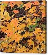 Yellow Foliage Acrylic Print