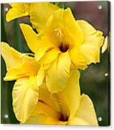 Yellow Gladiolus Acrylic Print