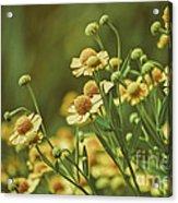 Yellow Green Acrylic Print