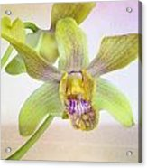 Yellow-green Orchid Acrylic Print