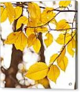 Yellow Happiness Acrylic Print