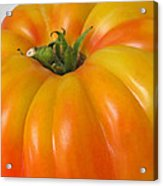 Yellow Heirloom Tomato Art Prints Acrylic Print