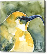 'akiapola'au - Hawaiian Yellow Honeycreeper Acrylic Print