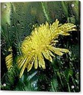 Yellow In The Rain Acrylic Print