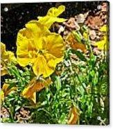 Yellow Flower In The Sun Acrylic Print