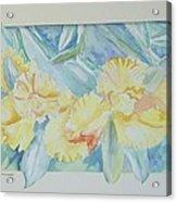 Yellow Iris' Acrylic Print