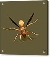 Yellow Jacket Wasp Acrylic Print