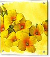 Yellow Kalanchoe - Succulent Sunshine Acrylic Print