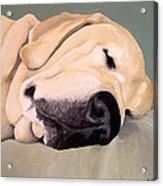 Yellow Lab - A Head Pillow Is Nice Acrylic Print