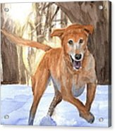 Yellow Lab Dog In Snow Watercolor Portrait Acrylic Print