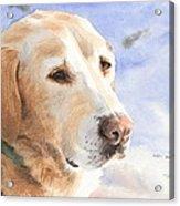 Yellow Lab In Snow Watercolor Portrait Acrylic Print