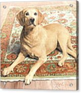 Yellow Lab On A Rug Watercolor Portrait Acrylic Print