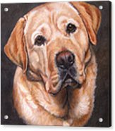 Yellow Labrador Portrait - Dark Yellow Dog Acrylic Print