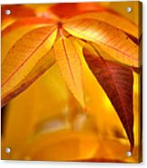 Yellow Leaves At Dawn Acrylic Print