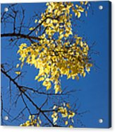 Yellow Leaves In Fall And Deep Blue Sky Acrylic Print