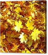 Yellow Leaves Acrylic Print