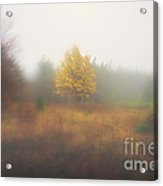 Yellow Leaves Of Tree In Fog At Dolly Sods Acrylic Print