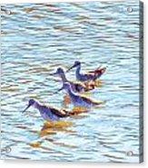Yellow Legs Quartet Photo Art Acrylic Print