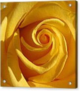 Yellow Light Acrylic Print by Etti PALITZ