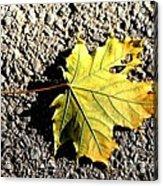 Yellow Maple Leaf On Asphalt Acrylic Print