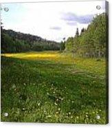 Yellow Meadow Acrylic Print