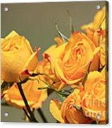 Yellow Mini Rose's Closeup Acrylic Print