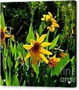 Yellow Mountain Flowers Acrylic Print