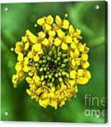 Yellow On Green Acrylic Print