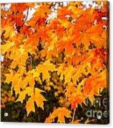 Yellow Orange Fall Tree Acrylic Print