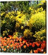 Yellow Orange - Springtime Acrylic Print