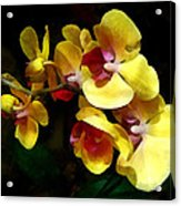 Yellow Orchids Shadow And Light Acrylic Print