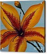 Yellow Oriental Lily Acrylic Print