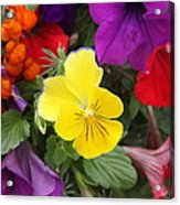 Yellow Pansy  Acrylic Print by Donald Torgerson