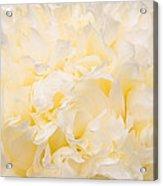 Yellow Peony Petals Acrylic Print