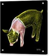 Yellow Piglet - 0878 F Acrylic Print