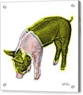 Yellow Piglet - 0878 Fs Acrylic Print