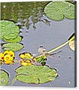 Yellow Pond Lilies On Lake Yellowhead Along Yellowhead Highway-b Acrylic Print