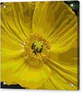 Yellow Poppy Flower Acrylic Print