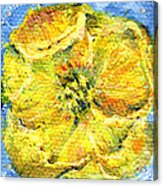 Yellow Poppy Acrylic Print
