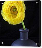 Yellow Ranunculus In Black Vase Acrylic Print