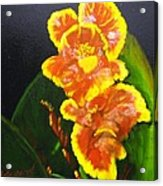 Yellow-red Canna Lily Acrylic Print