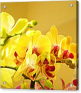 Yellow Red Orchid Flowers Art Prints Orchids Acrylic Print
