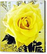 Yellow Rose 2 Acrylic Print