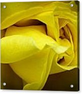 Yellow Rose Close Up. Acrylic Print by Slavica Koceva