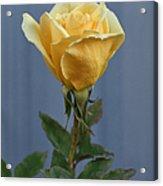 Yellow Rose Greeting Card Acrylic Print