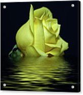 Yellow Rose II Acrylic Print by Sandy Keeton