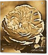 Yellow Rose Of Texas Floral Decor Square Format Rustic Digital Art Acrylic Print