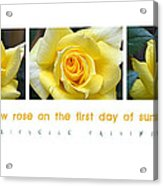 Yellow Rose On The First Day Of Summer Acrylic Print