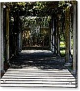 Yellow Rose Pergola Acrylic Print