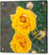 Yellow Roses On A Bush Acrylic Print